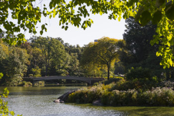 Magic in Central Park and Other Amazing Feats